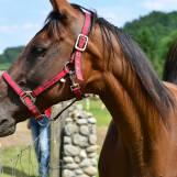 Ajax farma jazdenie na koni