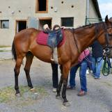 Jazdenie na koni