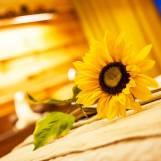 Masáže a procedúry Slnečné SPA